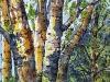 © Ces arbres sensibles et fiers
